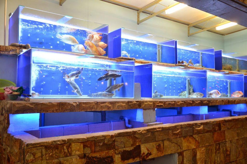 Bể cá hải sản nhà hàng đẹp